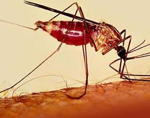 Há dez anos, pesquisadores iniciaram em Manaus um estudo internacional sobre a tafenoquina, um medicamento que pode reduzir o tratamento da malária para apenas uma dose.