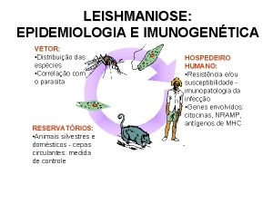 Leishmaniose: vacina brasileira poderá ser comercializada na Europa