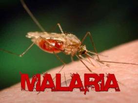 150622 - Malária