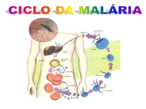 150730 - Ciclo de Malária