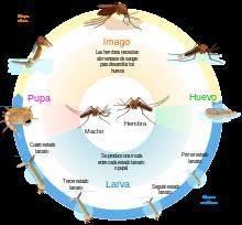 151008 - Circulo Dengue