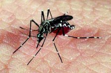 151008 - Mosquito Dengue