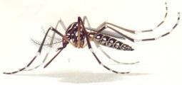 151203 - Mosquita Zika