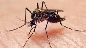 151214 - Mosquito Dengue