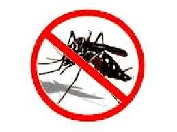 151218 - Surto Mosquito Zika