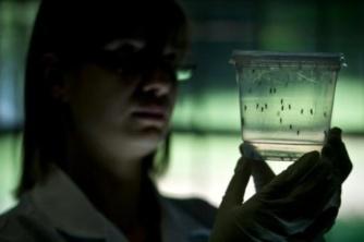 160524 - Copo Aedes aegypti e zika