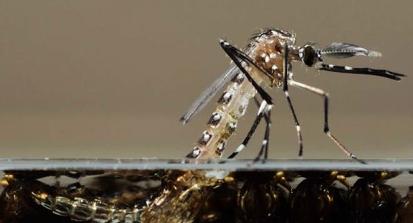 160715 - Dengue na água