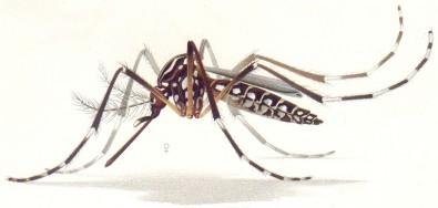 170905 - Mosquito